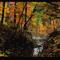 """Robert Glenn Ketchum - From """"The Cuyahoga Valley"""" exhibition"""