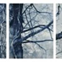 Rachel-Girard-Reisart_Tropism-8